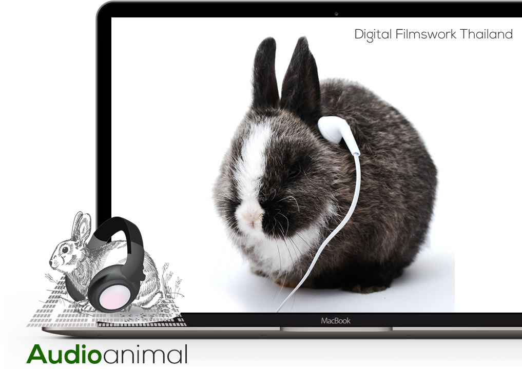 Filmswork Studio A brings out your audio animal